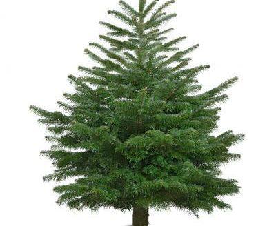 Kerstbomen actie 2019