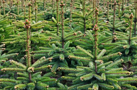 Laatste Kerstbomen 2020 voor het goede doel!